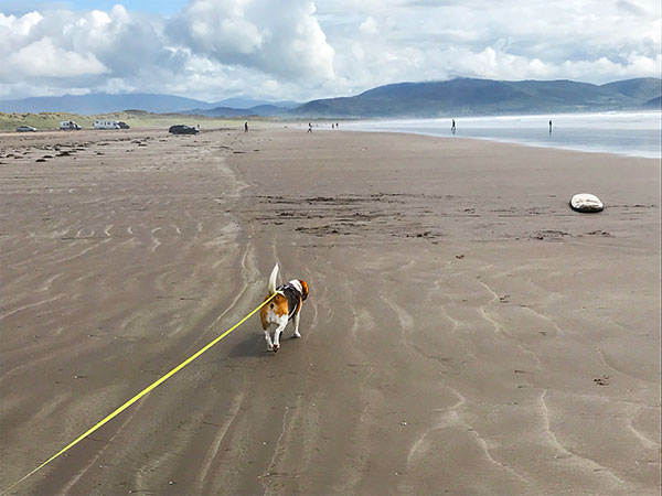 Wild Atlantic Way: Inch Beach