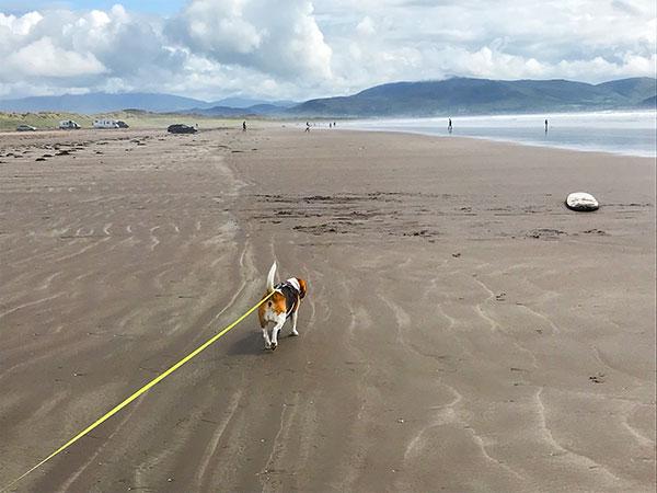Wild Atlantic Way: Inch Beach