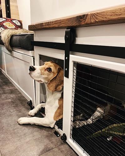 Piglet in her Dog Van Bed