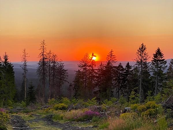 Van Life Germany: Harz mountains
